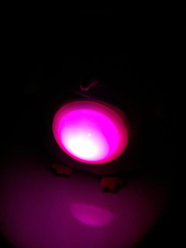 Nachtlicht Eule Latitude 332928